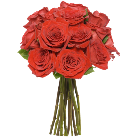 12 Rosas Rojas de Tallo largo (Sin Jarron)