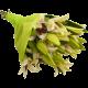 Bouquet Lilium Stargazer